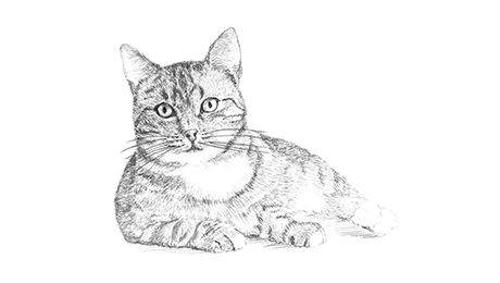 Drawing of a cat lying down