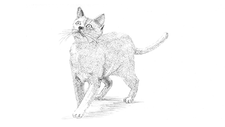 Drawing of a cat standing and looking up