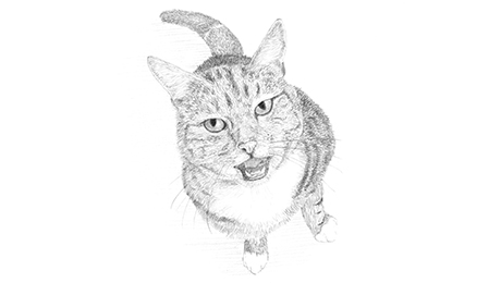 Drawing of a cat showing its teeth looking angry