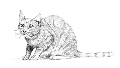 Drawing of a cat crouched timidly