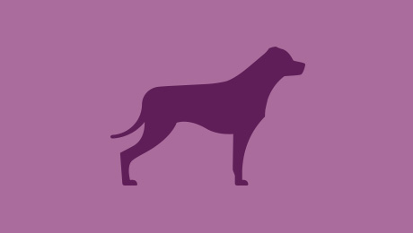 Purple dog symbol