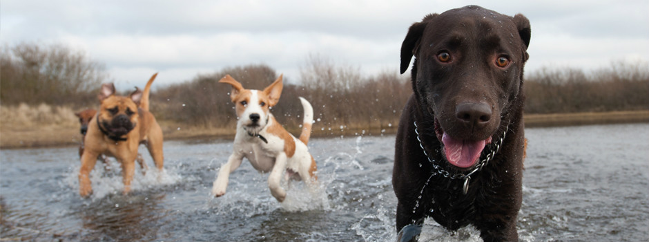 Dogs playing in a lake