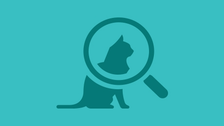 Magnifying glass and cat icon