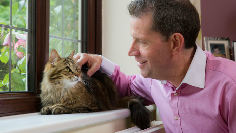Cat on windowsill being stroked