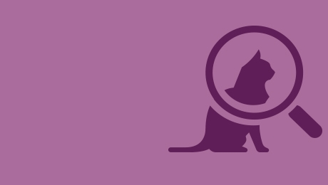 Purple cat and magnifying glass icon