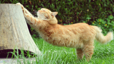 Ginger cat stretching and clawing scratch post