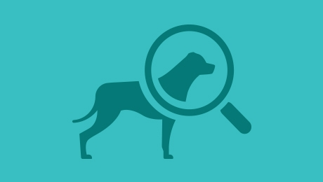 Blue Dog Magnify Icon