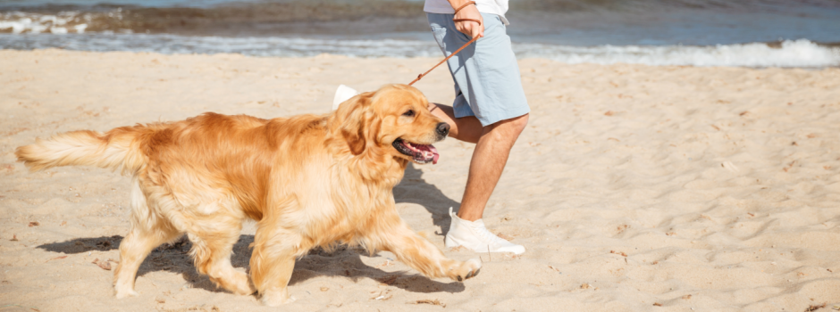 Dog running on the beach with its owner.jpg