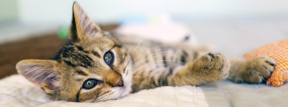 Making your home cat friendly