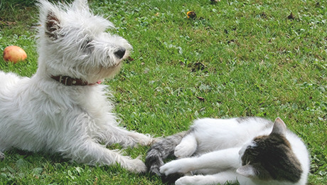 Fluffy white dog sitting in grass with white kitten
