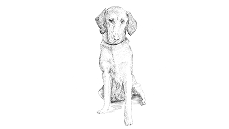Drawing of relieved dog