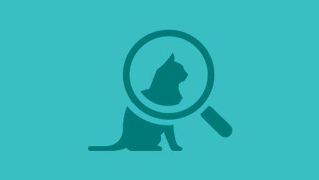 Magnifying glass with cat icon