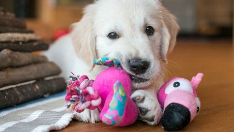 Puppy chewing toys