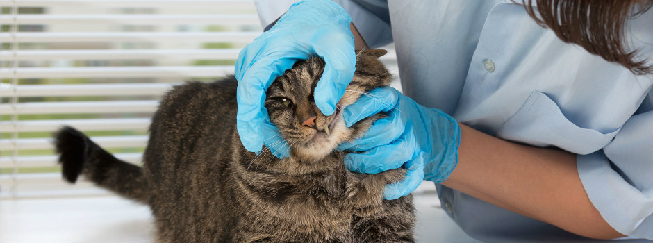 The importance of regular vet check-ups for cats