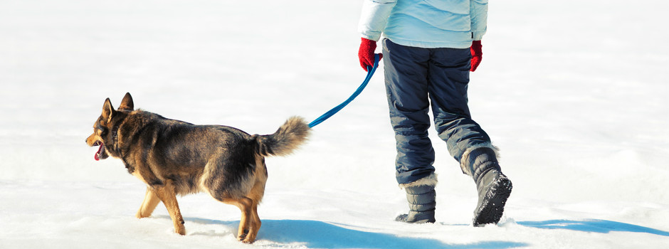 Dog and owner walking together in the heavy snow.