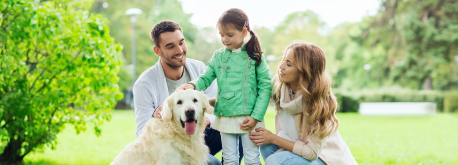 Dog in the park surrounded by family