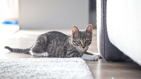 Wide eyed kitten crouched next to sofa