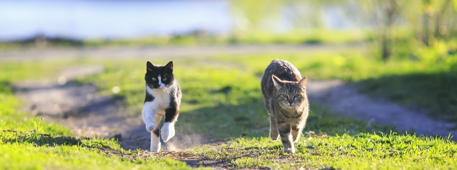 Two cats walking together