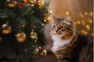 Tabby cat next to a Christmas tree with baubles
