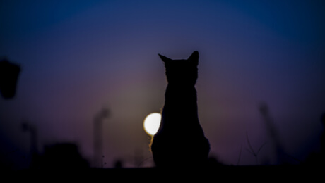 Silhouette of a cat at night looking at the moon