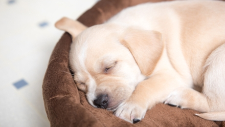 cute puppy sleeping in their own bed