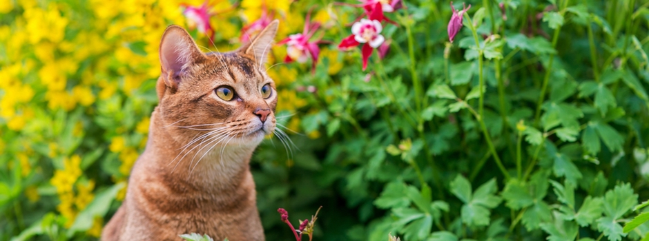 ginger tabby cat with flowers