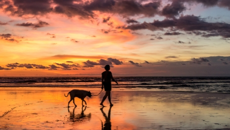 dog and owner walking on the beach