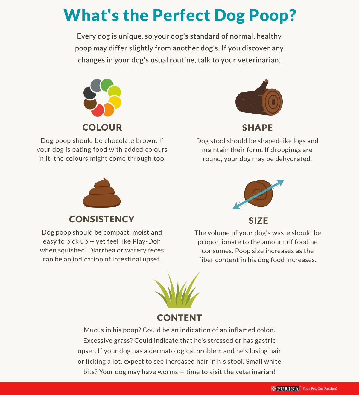 perfect dog poop guide
