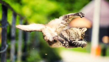 cat righting reflex in mid-air