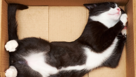 cat stretched out in a cardboard box