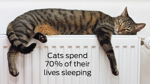 cats spend 70% of their lives sleeping