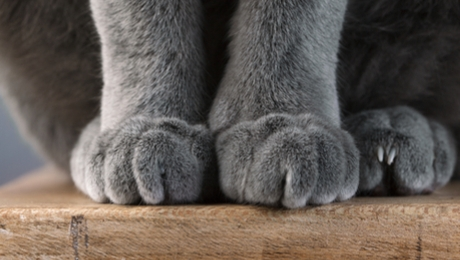 a cat's paws