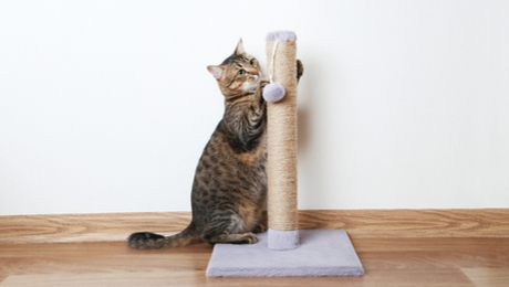 cat using scratching post