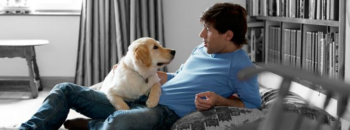 Golden retriever sitting on sofa with owner