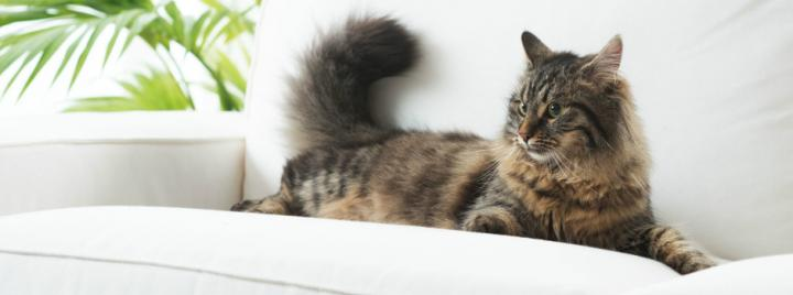 Brown cat laying on sofa