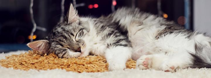 Cat sleeping on carpet with Christmas décor