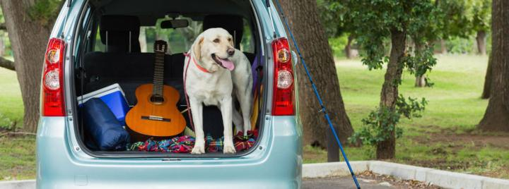 Dog in open car with luggage