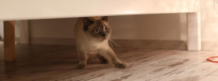 Cat with anxiety hiding under the bed