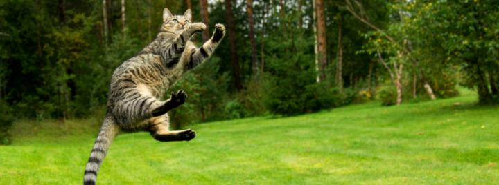 Cat leaping in the air